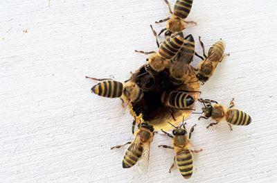 Arılar ve Doğa